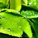 blaetter nachhaltigkeit bySchulzPhotography